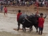 Buffalo races prove popular once again in Pattaya