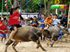Buffalo races come to Lake Mabprachan