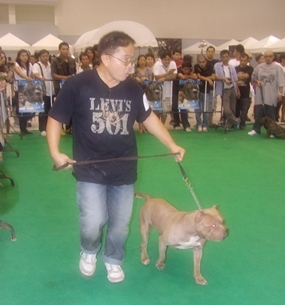Owners lead their prize pets around the ring for the judges to inspect.
