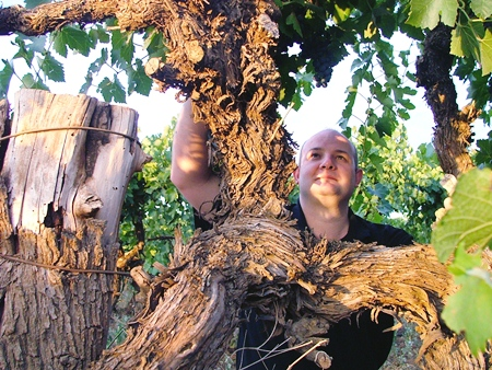 John Quarisa, winemaker and international wine show judge inspects 50-year-old vines.