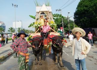 As part of the pageantry, officials arrive on decorated buffalo drawn carts.