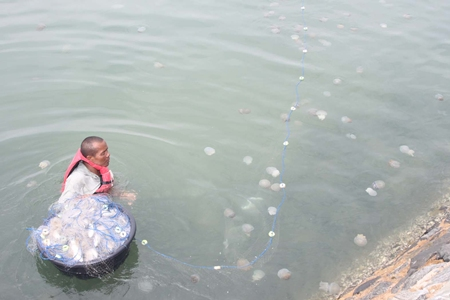 This fellow doesn't seem to be overly bothered by the stings as he tries to gather as many jellyfish as he can.