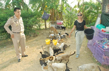 Feeding time for some of the 110 cats abandoned by flood victims.
