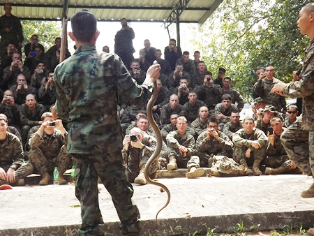 A Thai survival expert shows troops how to capture a cobra during the jungle survival exercises.