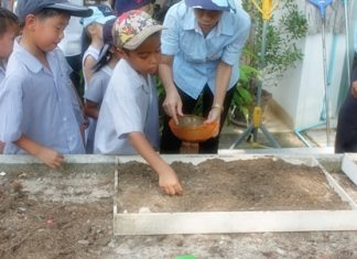 Alex learns to plant rice in our Thai lesson.