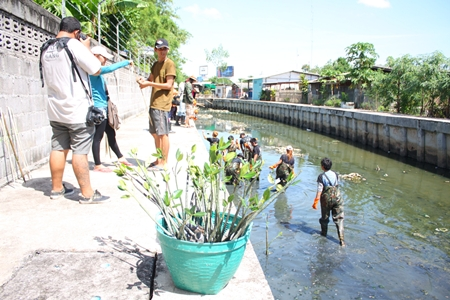 Hard Rock Hotel Pattaya employees plant mangrove shoots and clean garbage out of Nokyang Canal.