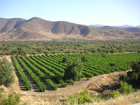 Vineyard in the foothills of the Andes (Photo: Beatrice Murch)