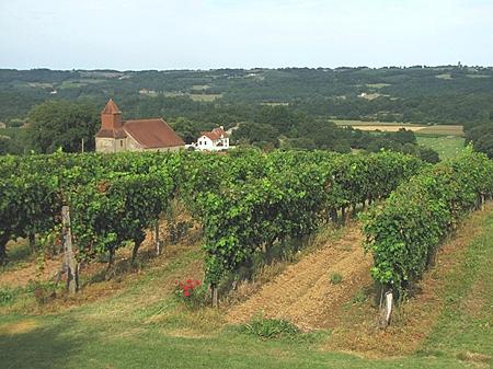 Madiran vineyards (© Jean-Marc Puech)