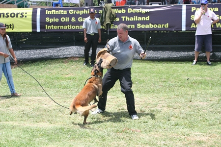 The afternoon segment of the entertainment starts off with Joe Cox's security dog show demonstration.