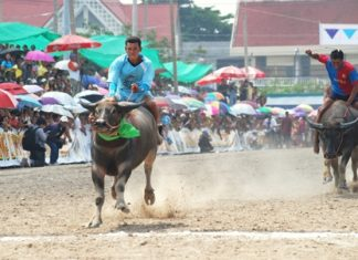 The 141st running of the Chonburi Buffalo Races will be part of the annual festival Oct. 26-Nov. 1.
