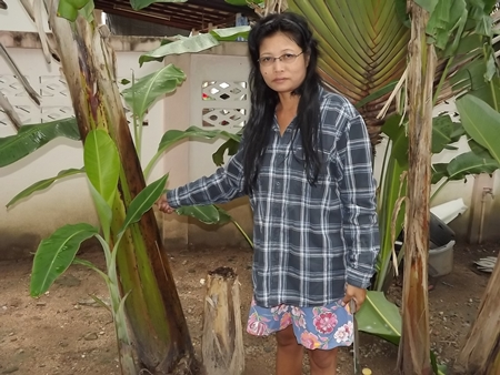 Buarat Spindee says she and her family plants banana trees every year for Loy Krathong.