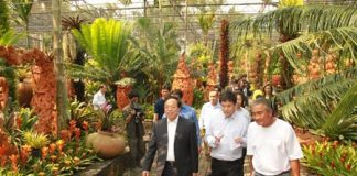 The Chinese delegation is given a tour of Nong Nooch Tropical Gardens.