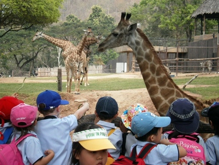Feeding the giraffes.