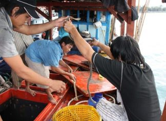 Crewmen and officials bottle up the snakes so that they are more easily confiscated.
