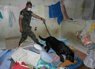 Officials use a dog to sniff out drugs at Rayong prison. So far, they didn't find any, but did find a cache of shivs.