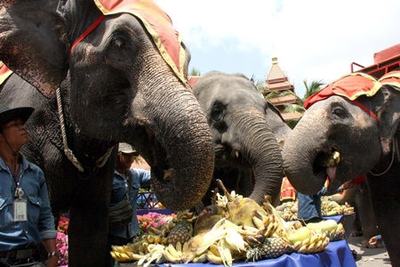 Elephants enjoy a festive meal on Thai Elephant Day at Nong Nooch Tropical Gardens.