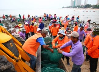 Over 100 city workers are put to work removing dirty rocks from Wong Amat Beach.