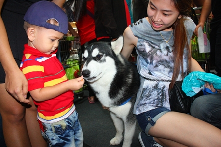 Children enjoy feeding the dogs.