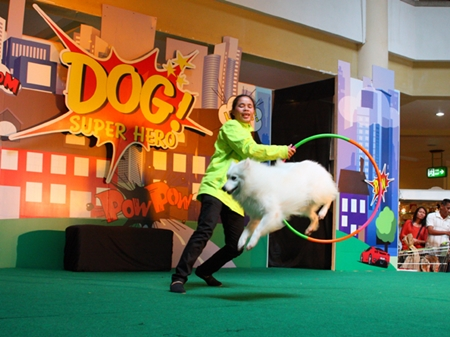 Trained dogs show off their skills at the Dog Super Hero 2013 show.