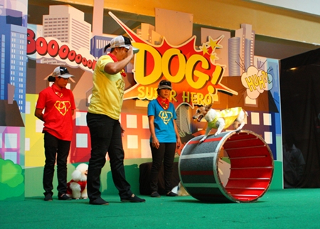 Dogs skills performances thrill the audience.