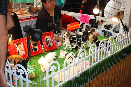 Thai puppy farms crank up the cuteness to sell new pets to the youngsters.