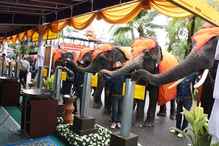 Nine elephants each pour hot wax into candle molds.  The finished candles were presented to nine area temples for Buddhist Lent.