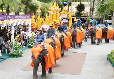 Nong Nooch Tropical Garden's 39 elephants bring up the rear of their parade.