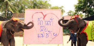 """Pachyderms Yok and Baiyok celebrate Mother's Day by drawing a heart and filling it with the Thai words """"Love is Mother""""."""