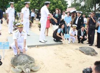 Adm. Thaweewuth Pongphipat releases the biggest of the 982 turtles set free in celebration of HM the Queen for her 81st birthday.