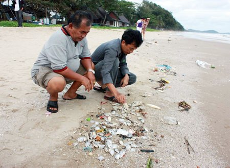 Officials at Mae Rampung Beach in Rayong are blaming the recent oil spill for the mass fish die-off in the area.