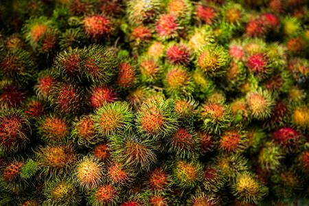 Visitors can feast on rambutans at the orchard.