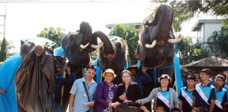 Elephants enlist the locals to help clean up the area outside Nong Nooch Tropical Garden.
