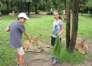 Caring learners feed the deer at Khao Kheow Zoo.