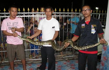 Animal rescue rescuers managed to lasso the snake and move it back into the jungle.