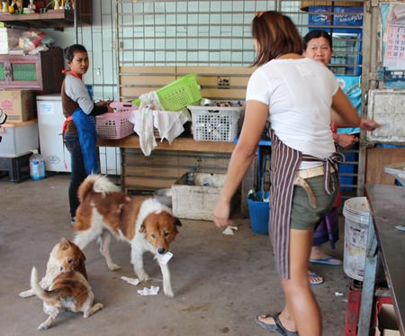 Clever Mink, center, on floor, brings back change after buying some snacks at the shop next door.
