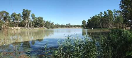 The Murray River, near Loxton (Photo: Dwayne Madden)