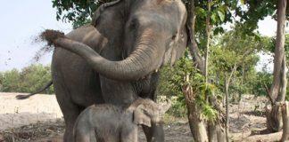 The new elephant calf is a playful male born Jan. 6.