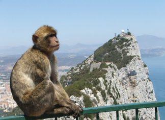 Interested spectator in Gibraltar.