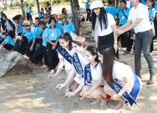Top finishers in November's Miss Mimosa Queen transvestite beauty pageant make merit by releasing sea turtles into the wild.