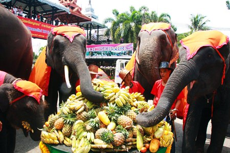 Nong Nooch Tropical Garden celebrated National Elephant Day by providing a great feast for their revered pachyderms.  They also celebrated the birth of two new calves, calling the births auspicious as they occurred during the lead up to the event. The day is observed every year to recall the role the mammals have played in the hearts and history of the kingdom.