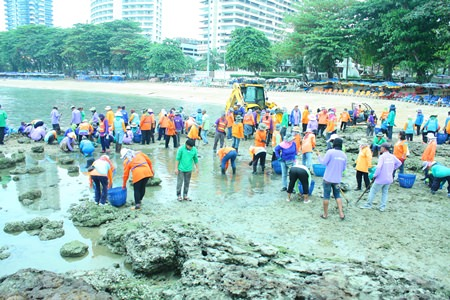 City workers take a day at the beach - not to bask in the sun, but to clear away the algae covered rocks.