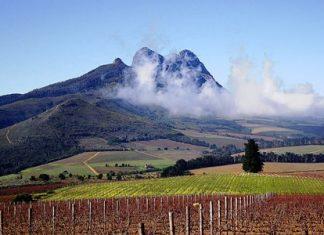 Vineyards near Stellenbosch (Photo: Warrenski)