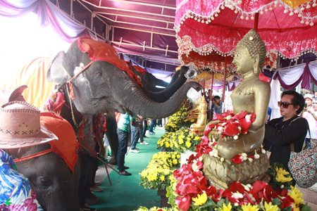Elephants at Nong Nooch Tropical Gardens pour lustral water on the Buddha statues there.