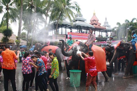 Nong Nooch elephants use their built-in water guns to hose down revelers.