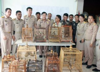 District Chief Phawat Lertmukda and officers from the Sattahip Command Centre for Drug Elimination turn over 18 red-whiskered bulbuls to the Banglamung Wildlife Breeding Station in Khao Chi On.