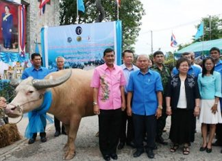 The Million Years Stone Park has donated Chonburi-bred buffalos to farming families in 11 districts in a belated celebration of HM the Queen's Aug. 12 birthday.