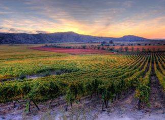 La Rinconada vineyard, source of Las Condes wines.