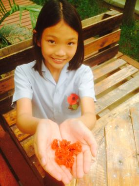 This clever Year 7 student made her own mini poppies to give to teachers.