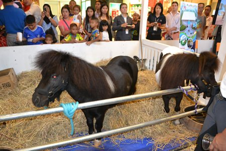 Little ponies were brought to Central Festival Pattaya Beach for children to see.