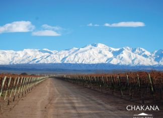 Vineyards near the Andes (Photo: © Chakana Wines)